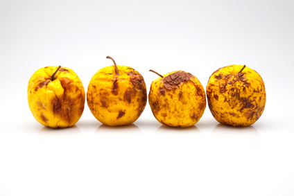 four yellow apples in a bad state
